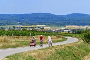 Radfahrer  bei Schützen am Leithagebirge nahe  Neusiedler  See